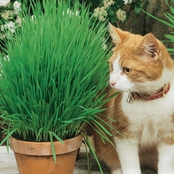Trawa dla kota – kiepenkerl