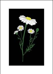 Rumianek nocą - plakat wymiar do wyboru: 40x50 cm