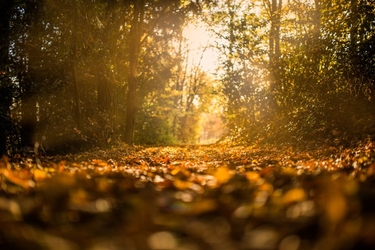 Ścieżka w lesie - plakat wymiar do wyboru: 60x40 cm