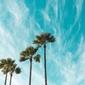 Palmy na tle nieba - fototapeta