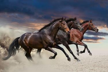 Fototapeta konie 1679