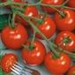 Pomidor picolino f1 – koktajlowy– kiepenkerl