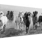 Dusty plains - obraz na płótnie