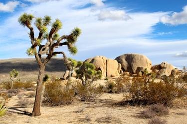 Fototapeta skały drzewo 618