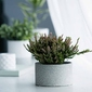 Osłonka na doniczkę dekoracyjna porcelanowa altom design dekoracja granit 8,5 cm