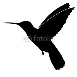 Tapeta ścienna colibri