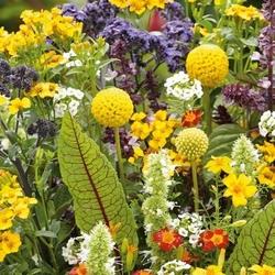Kwiaty pachnące słodyczami – mix nasion – kiepenkerl