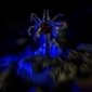 Alien - facehugger - twarzołap - plakat wymiar do wyboru: 91,5x61 cm