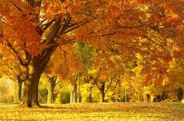 Jesienny Kajobraz - fototapeta