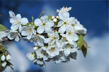 Fototapeta kwiaty 85