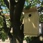 Budka lęgowa dla mniejszych ptaków