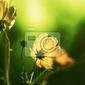 Fototapeta kwiaty o świcie