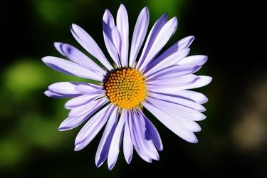 Fototapeta kwiat 355