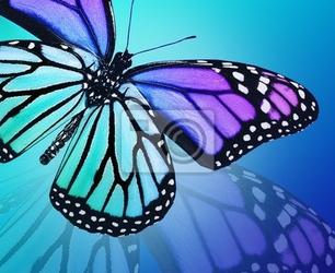 Fototapeta niebieski motyl na niebieskim tle