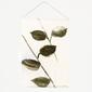 Urban nature culture :: plakat leafs