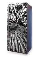 Foto naklejka na lodówkę drzewo p11