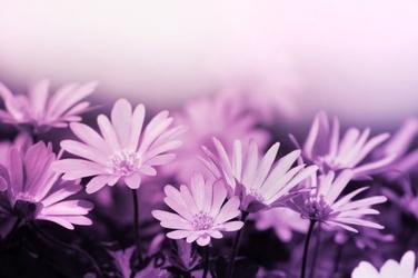 Fototapeta kwiaty 2213