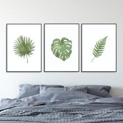 Zestaw trzech plakatów - plant family , wymiary - 60cm x 90cm 3 sztuki, kolor ramki - biały