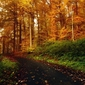Fototapeta droga w rudym lesie fp 1436