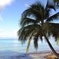 Fototapeta malownicza palma fp 1577