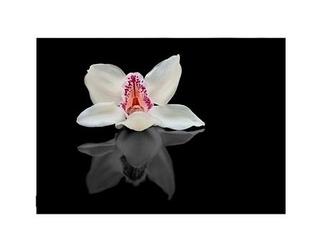 Biała orchidea - reprodukcja