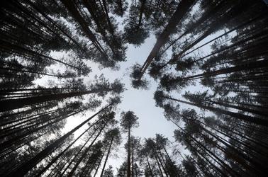 Fototapeta widok na szczyty drzew fp 1798