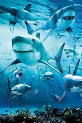 Rekiny infested - plakat