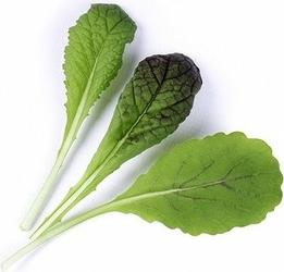Wkład nasienny Lingot warzywa liściowe musztardowiec Red Giant