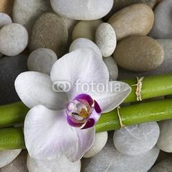 Obraz na płótnie canvas czteroczęściowy tetraptyk orchidea i bambus