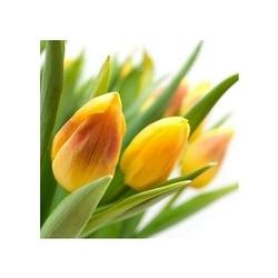 Żółte tulipany - reprodukcja