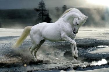 Horse Snow - plakat