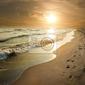 Fototapeta golden sunset na brzegu morza