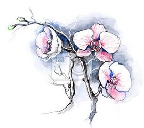 Naklejka orchidee
