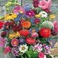 Kwiaty cięte – mieszanka – kiepenkerl