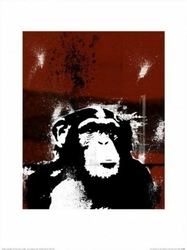 Małpa - reprodukcja