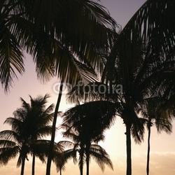 Tapeta ścienna palmy o zachodzie słońca w miami, florida, usa.