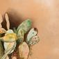 Kaktusy - plakat wymiar do wyboru: 40x50 cm