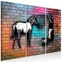 Obraz - pranie zebry - kolorowa cegła 3-częściowy
