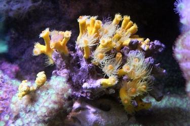 Fototapeta rafa koralowa fp 2468