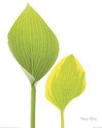 Zielone liście - reprodukcja