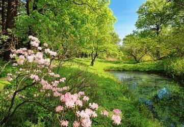 Drzewa, kwiaty - fototapeta