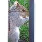 Foto naklejka na lodówkę wiewiórka p41