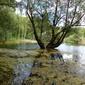 Fototapeta drzewo w wodzie 725