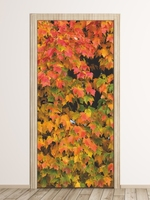 Fototapeta na drzwi jesienne liście fp 6068