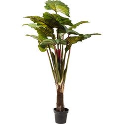 KARE Design :: Roślina dekoracyjna Rainforest Red 170cm