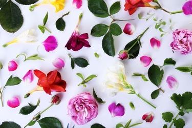 Fototapeta kwiatki 2221