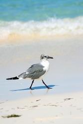 Fototapeta na ścianę ptak spacerujący po plaży fp 2552