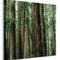 Crescent Woods - obraz na płótnie