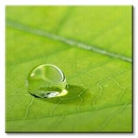 Liść, kropla wody - obraz na płótnie