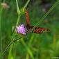Naklejka samoprzylepna motyl i kwiat